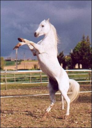 Ce cheval ...