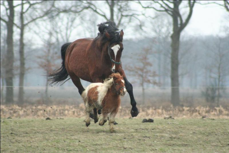 Un cheval fait partie de la famille des ...