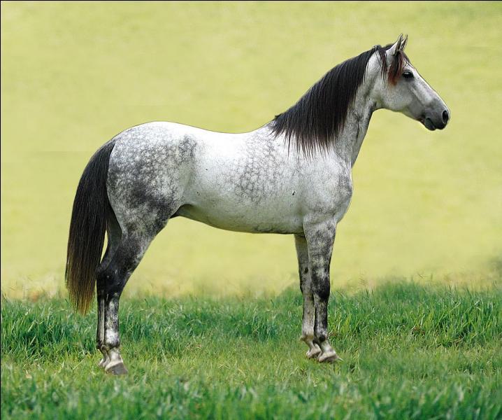 Ce cheval est ...