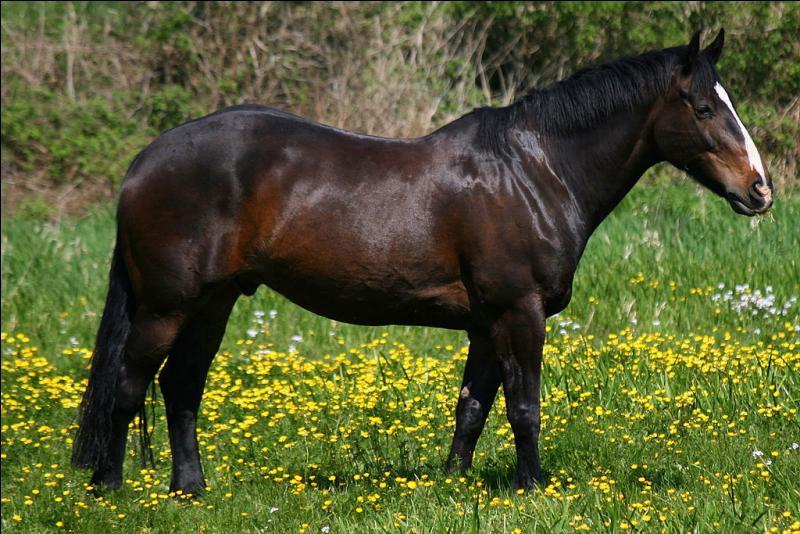 Un cheval est ...