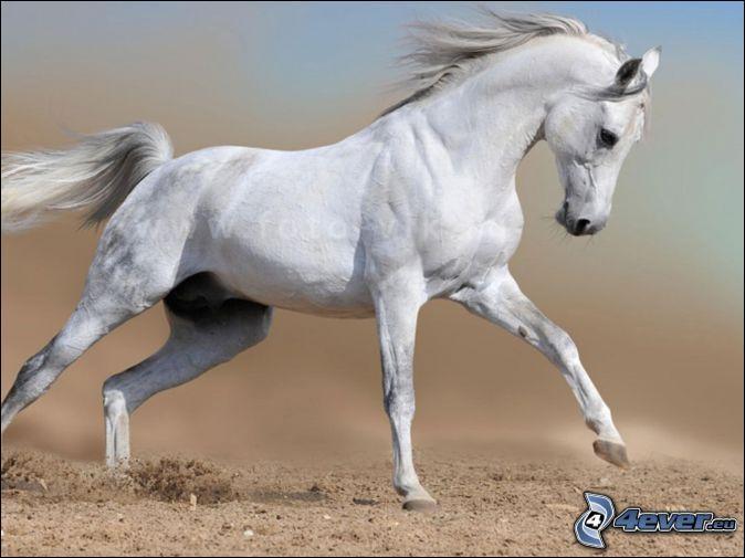 Pour connaître l'humeur d'un cheval, il faut ...