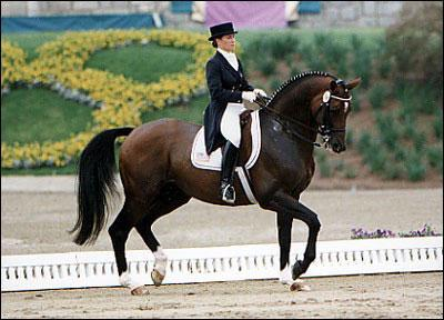 Le cheval pour les nuls (façon de parler)