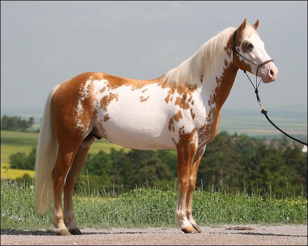 ... horse race pie related recipes that horse race pie horse race 10 best