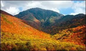 Ces montagnes inférieures à 2000 mètres et magnifiquement colorées en automne forment le parc national des Great Smoky Mountains. Nous voici :