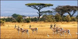 Changement de décor. Voici la savane du parc national de Chobe. Nous sommes :