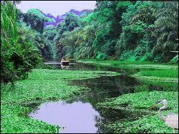 Le parc national de Tortuguero est célèbre pour sa flore et sa faune exceptionnelles et pour ses canaux que vous pourrez parcourir en pirogue. Il se situe :