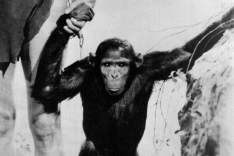 Une citation de Coluche, pour vous aider : Bonjour ..., moi ..., toi bonjour. Il est con hein ! Mais c'est un singe !