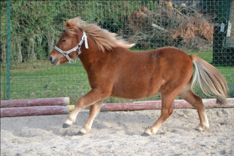De quelle couleur est ce poney ?