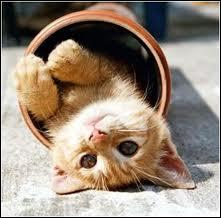 D'après un certain chat de gouttière, quelle est la particularité d'un chat ?