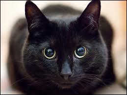 Que dit-on du chat ?
