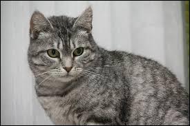 Dans la célèbre fable de Jean de la Fontaine, quel animal le chat rencontre-t-il ?