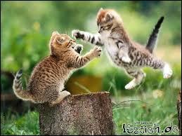 Quel animal les enfants considèrent-ils comme ennemi du chat ?