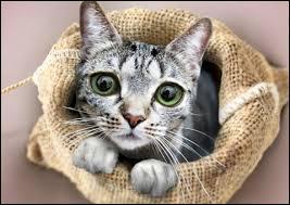 """Qui a écrit """"Comment penser chat"""" ?"""
