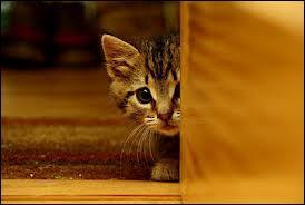 """En allemand, comment traduiriez-vous """"le chat"""" ?"""
