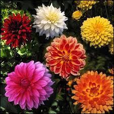 Pouvez-vous me donner le nom de ces fleurs ?