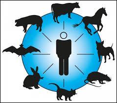 Comment appelle-t-on une maladie transmise à l'homme par des animaux ?