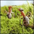 Comment s'appelle le parc consacré aux insectes ?