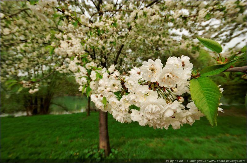 En France, sur le calendrier, le printemps commence le 20 ou 21 mars, soit...