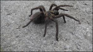 Et pour finir, quelle est cette araignée ?