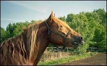 Un hennissement faible et doux signifie que le cheval est....