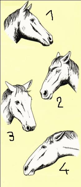 Le cheval n°1 présente une attitude d'éveil ou d'intérêt.
