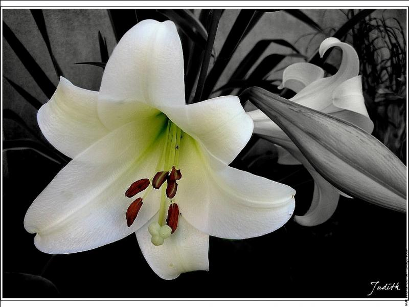 quizz quelques jolies fleurs quiz fleurs. Black Bedroom Furniture Sets. Home Design Ideas