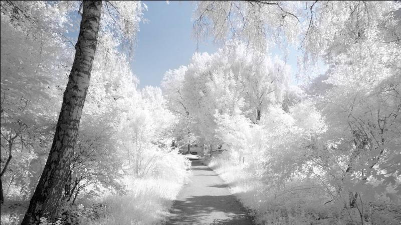 """Qui chantait """"L'hiver est glace, l'été est feu, Ici y'a jamais de saison pour être mieux"""" ?"""