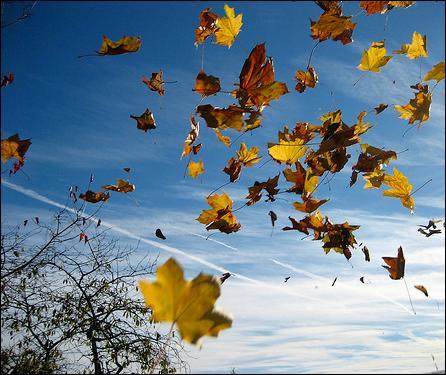 """Qui chantait """"Quand revient le vent de l'automne, je pense à tout ce temps perdu"""" ?"""