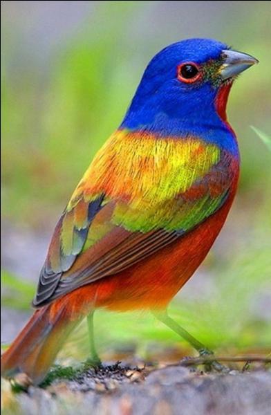 Il existe des oiseaux multicolores. Existe-t-il des chevaux multicolores ?