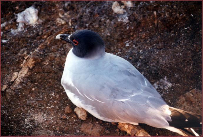 Petit plus pour la fin, quelle est la particularité de cet oiseau ?