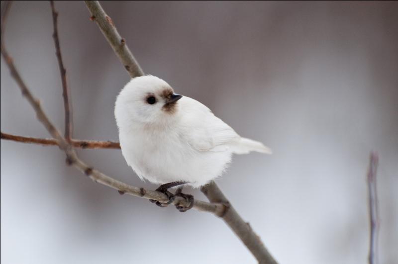 Si ce petit oiseau était un cheval, il serait...