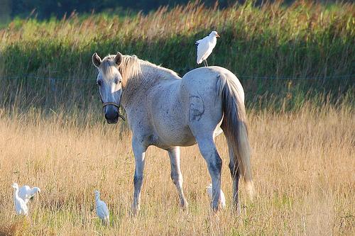 Robes de chevaux sur les oiseaux