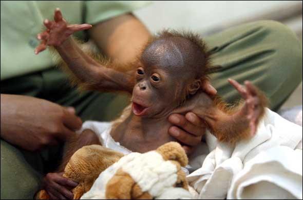 Il est facile à reconnaître, c'est un bébé ...