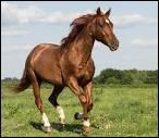 Quelle est la discipline où excellent les Quarter Horses et les Paint Horses ?