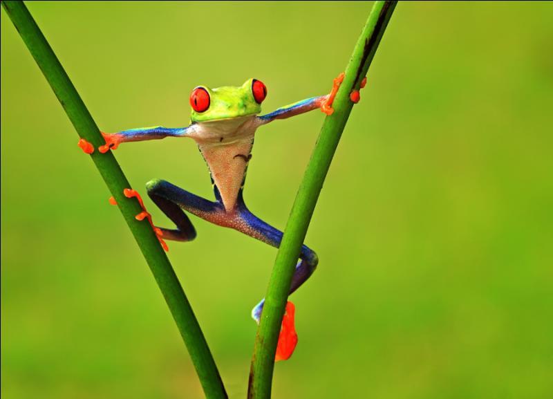 Il pleut, il ..., c'est la fête à la grenouille !