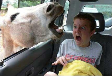 Faire l'âne pour avoir ...