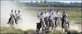 Les chevaux de Camargue sont montés par...