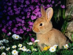 Le lapin dans tous ses états !