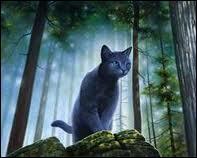 Quel est le nom de chaton d'Étoile Bleue/ Lune Bleue ?