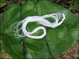 """""""Cousu de fil blanc"""" signifie :"""