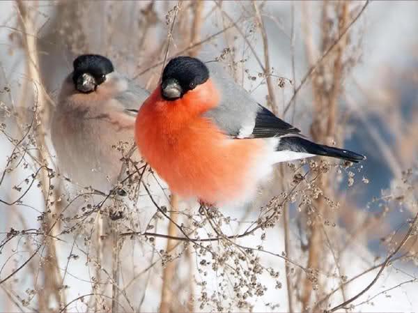 Oiseaux de nos campagnes ! 1