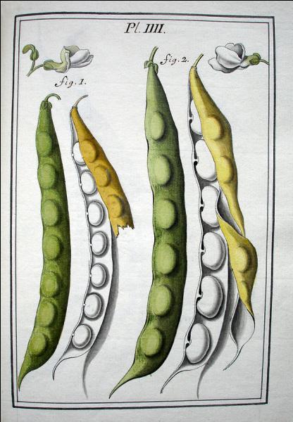 """Surnommée la """"Cité du Vase"""", cette ville du département de l'Aisne est aussi réputée pour la culture du haricot blanc. Quel est son nom ?"""