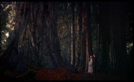 Dans le célèbre film d'Hitchcock, Vertigo (Sueurs froides), l'action se déroule à San-Francisco, mais les personnages visitent un lieu que le réalisateur rend étrange à souhait, pour servir l'intrigue. Ce lieu célèbre de Californie est ?