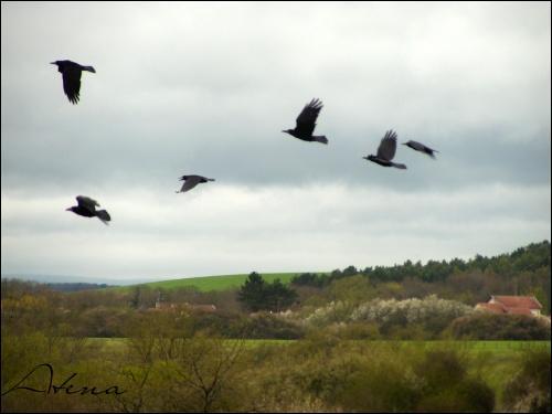 """Complétez cette hymne que vous connaissez tous : """"Ami, entends-tu le vol noir des corbeaux sur la plaine, Ami entends- tu..."""