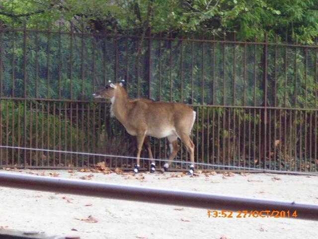 Quizz les animaux de la m nagerie du jardin des plantes 3 - Les animaux du jardin ...