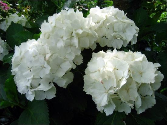 Serez-vous capables de reconnaître ces fleurs, aussi jolies, qu'imposantes ?