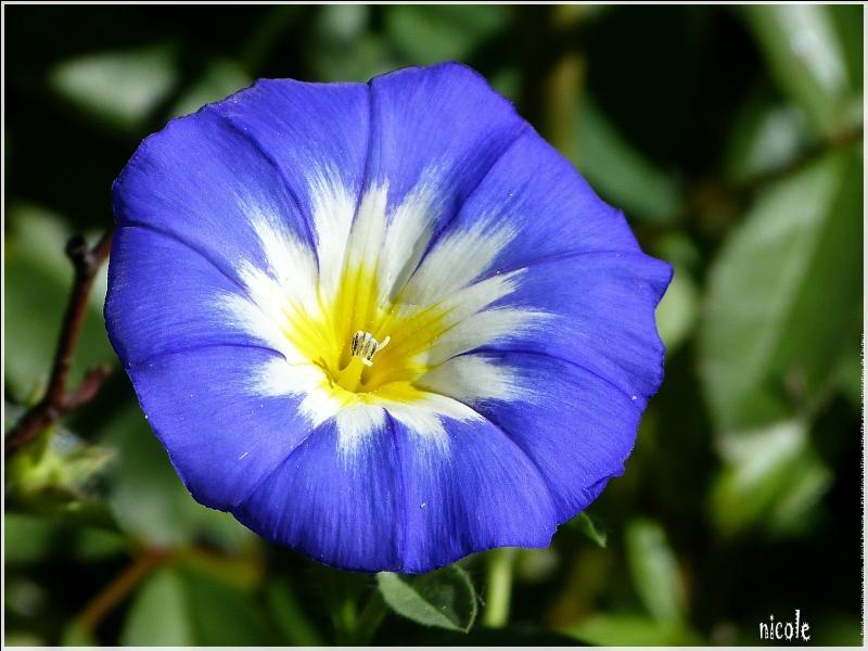 Quelle est cette magnifique fleur ?