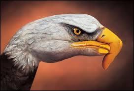 Cet aigle a un gros problème, ce n'est pas un vrai. Mais alors, qu'est-ce que c'est ?