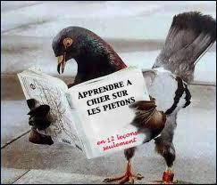 Ce pigeon apprend ! Que lit cet oiseau ?