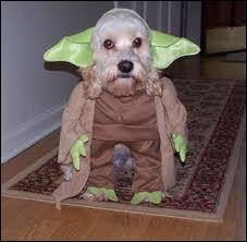 En qui est déguisé ce chien ?